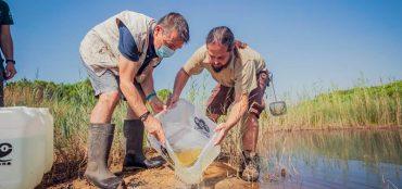El Zoo reintrodueix més de 200 peixos al Delta del Llobregat