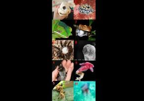 animalsextranys170612