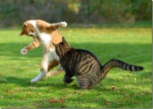 Els gats ninja estan saltant de vídeo en vídeo a YouTube. (Foto: todochistoso.com)