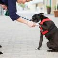 ordenança per a gossos