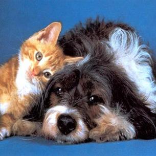 Gats i gossos, animals amb un olfacte privilegiat. (Foto: perros.com)