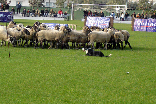 gossos-atura1