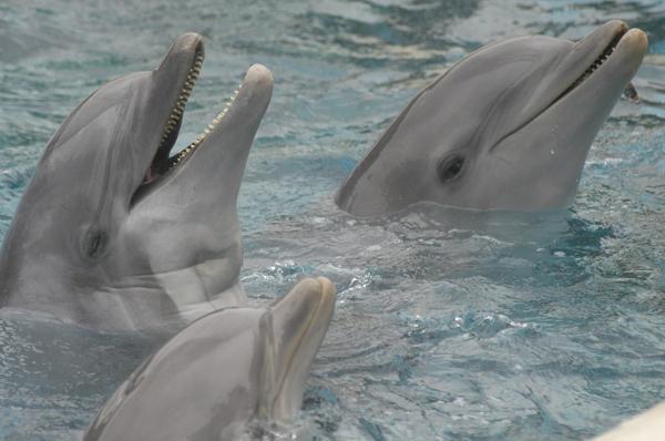 dofins trobats morts a Itàlia