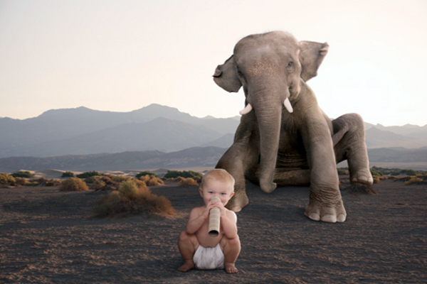 nen-elefant1