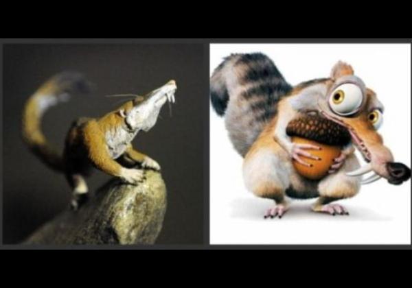 Rata esquirol