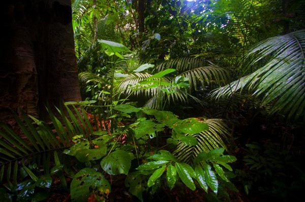 Selva amazònica