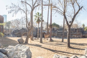 zoo-sabana-sahel18